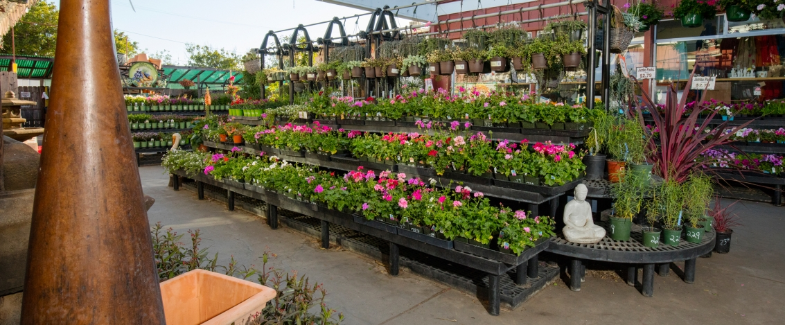 home improvement garden center
